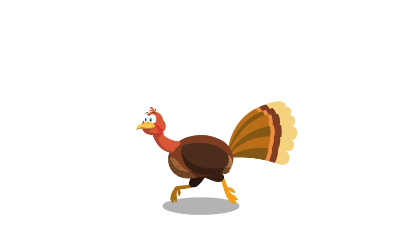 Thanksgiving Turkey Bird Cartoon Character Running.  4K Animation Video Motion Graphics Without Background
