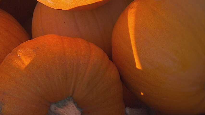 Halloween And Lot Of Autumn Pumpkin | Shutterstock HD Video #1056604034