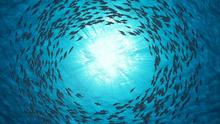 School of fish sharks swim in a circle | Shutterstock HD Video #1056653306