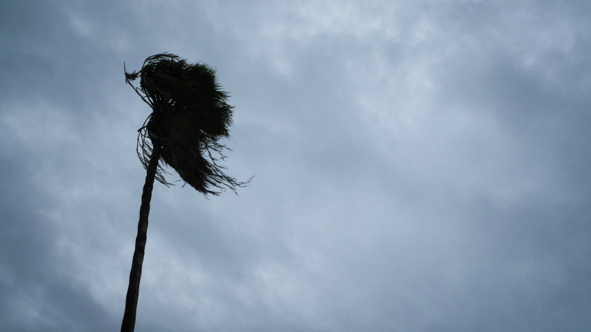 An Approaching Hurricane Blows A Palm Tree Royalty-Free Stock Footage #1056666680
