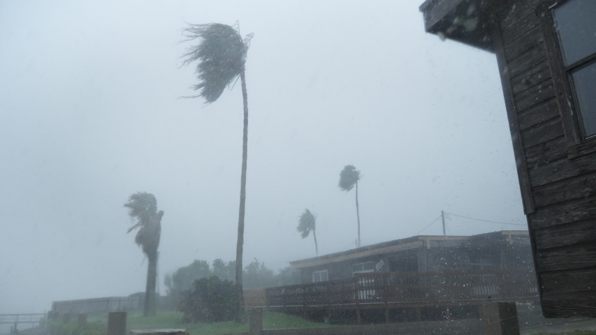 Hurricane Force Winds Blow Palm Trees During Hurricane Hanna #1056666695