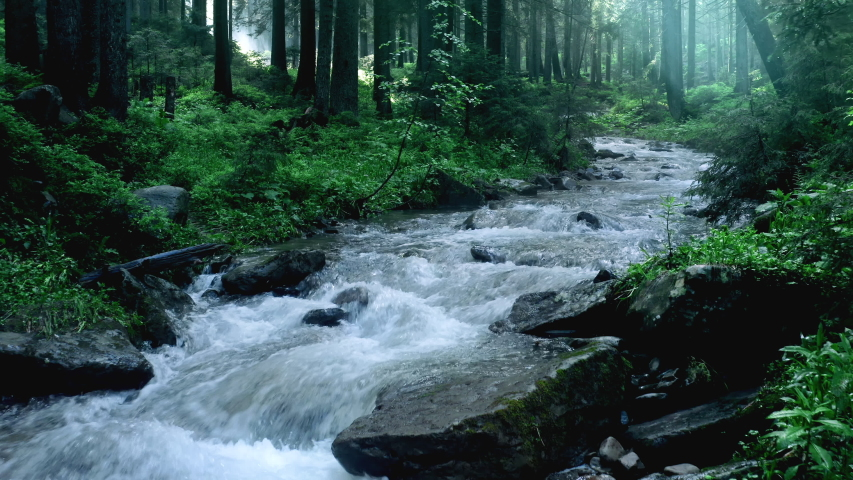 Mountain river with low rapids flows inside mysterious forest. Aerial.