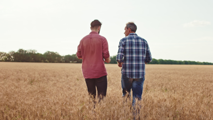 Concept of agriculture walking through the wheat field farmer mature man and his son charismatic guy they analyzing the new technology of agriculture and farming. Shot on ARRI Alexa Mini Royalty-Free Stock Footage #1056702794