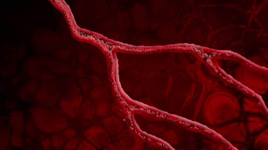 Animation featuring a fluid or red blood cells flowing through a vein or artery in the body.