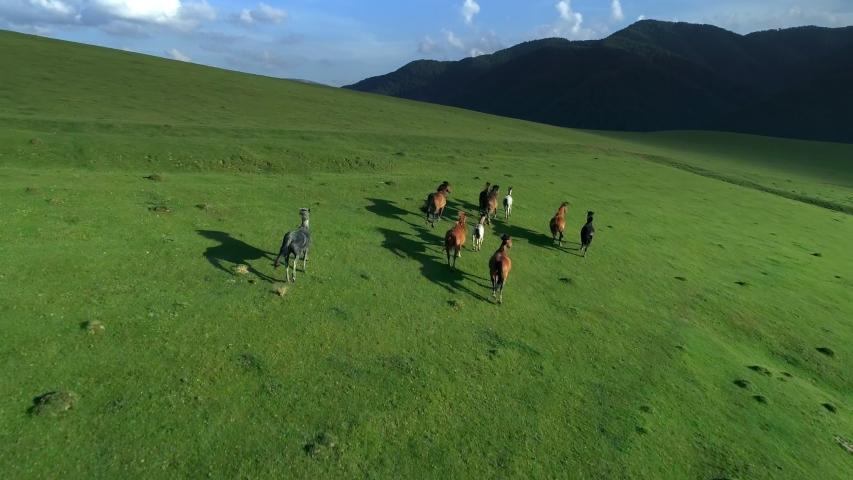 Wild Horses running through mountain hills. Slow motion Herd of Animals Stallions galloping Wild nature concept. Fresh sunny grassy mountain meadow spring summer season Landscape. | Shutterstock HD Video #1056833333