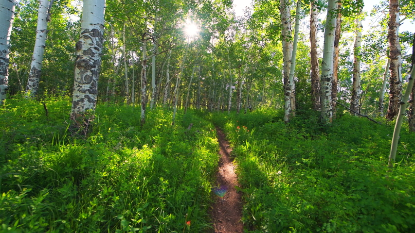 Forest meadow point of view walking 360 degree roll on Sunnyside Trail in Aspen, Colorado in Woody Creek neighborhood in morning of early 2019 summer with dirt road path | Shutterstock HD Video #1056867266