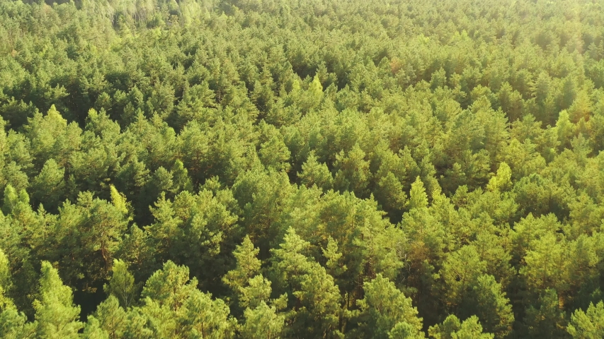 Aerial View Of Green Forest Landscape. Top View From High Attitude In Summer Evening. Natural Backdrop Background Of Coniferous Forest. Drone View. Bird's Eye View Royalty-Free Stock Footage #1056877883