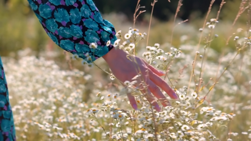 Hand Touches Grass In Wild Field.Female Enjoying Nature At Sunrise.Beautiful Girl On Meadow.Sun Through Hands.Girl Relax On Morning.Woman Walking On Summer Field.Woman Hands Close Up Touches Flowers. | Shutterstock HD Video #1056880781