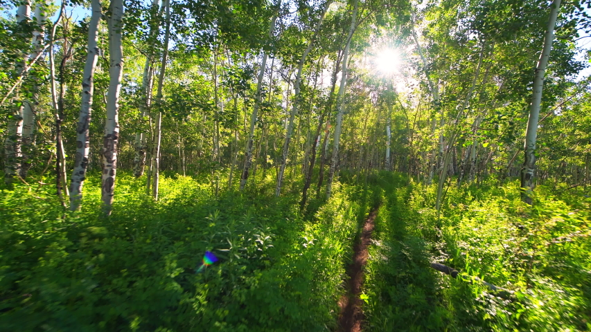 Forest meadow point of view walking 180 degree roll on Sunnyside Trail in Aspen, Colorado USA in Woody Creek neighborhood in morning of early 2019 summer with dirt road path | Shutterstock HD Video #1056934679