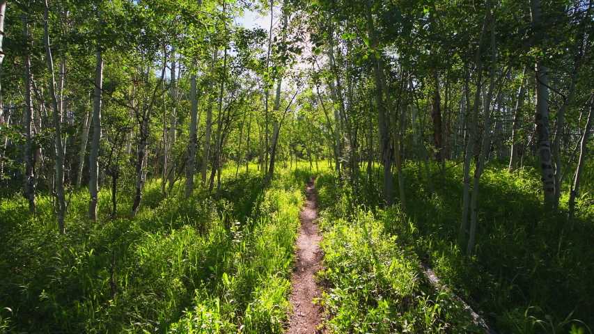 Forest meadow point of view walking on Sunnyside Trail in Aspen, Colorado in Woody Creek neighborhood in morning of early 2019 summer with dirt road path | Shutterstock HD Video #1056934682