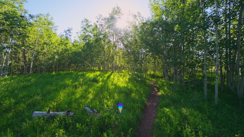 Forest pov handheld panning on Sunnyside Trail in Aspen, Colorado in Woody Creek neighborhood in morning of early 2019 summer with wildflowers and dirt road path | Shutterstock HD Video #1056934685