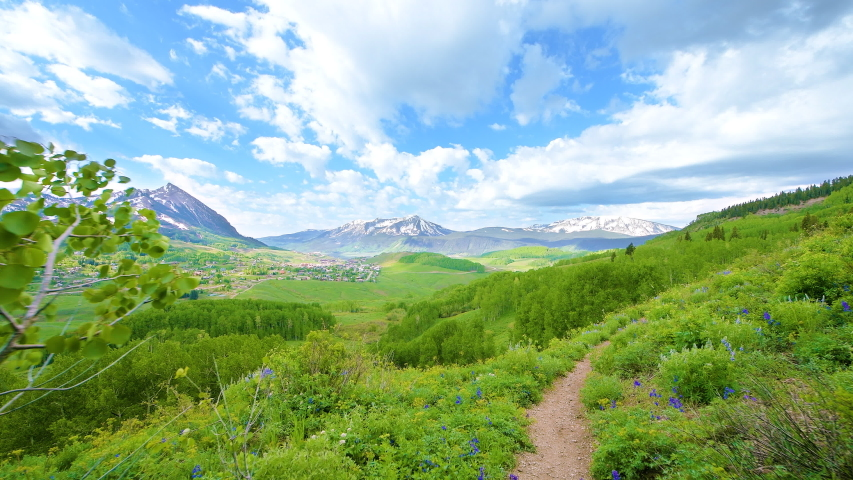 Handheld panning point of view walking hiking by many lupine flowers on Snodgrass trail with view of Mt Crested Butte, Colorado ski village in summer