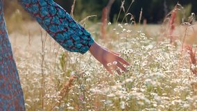 Girl Relax On Morning.Woman Walking On Summer Field.Woman Hands Close Up Touches Flowers.Hand Touches Grass In Wild Field.Female Enjoying Nature At Sunrise.Beautiful Girl On Meadow.Sun Through Hands.