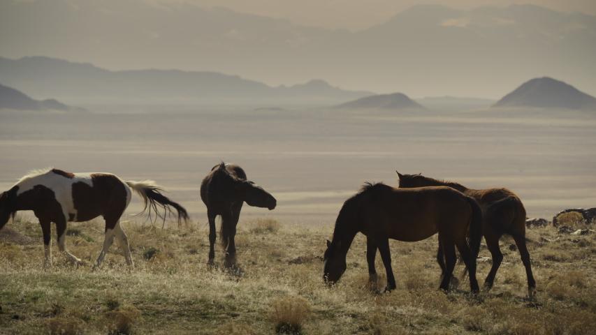 Tracking shot of horses running and grazing near mountain range / Dugway, Utah, United States