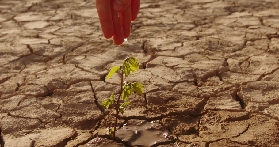 Close up shot of hand watering a lttle sprout on deserted ground. Cracked dead soil in dried lake or river - ecological disaster, save our planet 4k footage Royalty-Free Stock Footage #1056978197