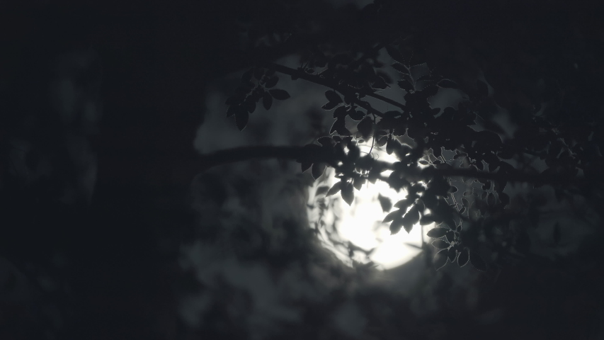 Scary full moon at night through trees and leaves. | Shutterstock HD Video #1056979793