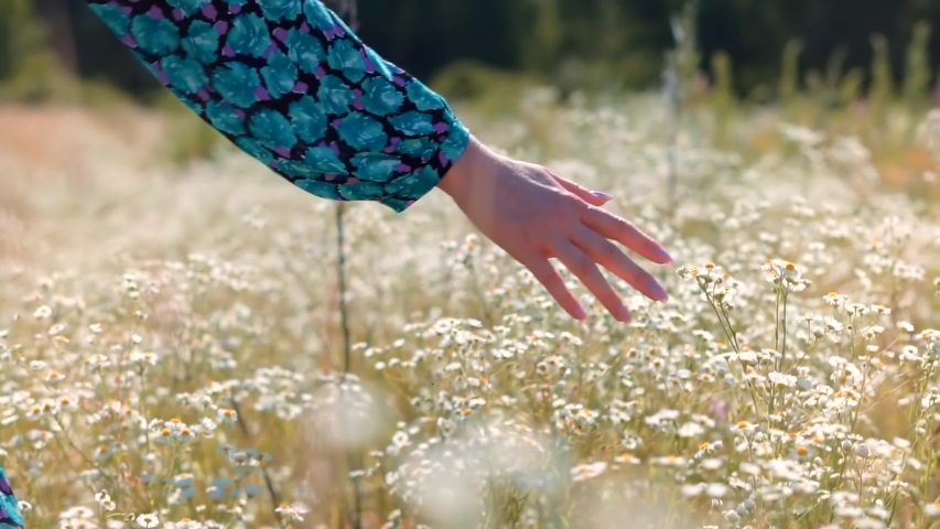 Beautiful Girl On Meadow.Sun Through Hands.Girl Relax On Morning.Woman Walking On Summer Field.Woman Hands Close Up Touches Flowers.Hand Touches Grass In Wild Field.Female Enjoying Nature At Sunrise. | Shutterstock HD Video #1057037948