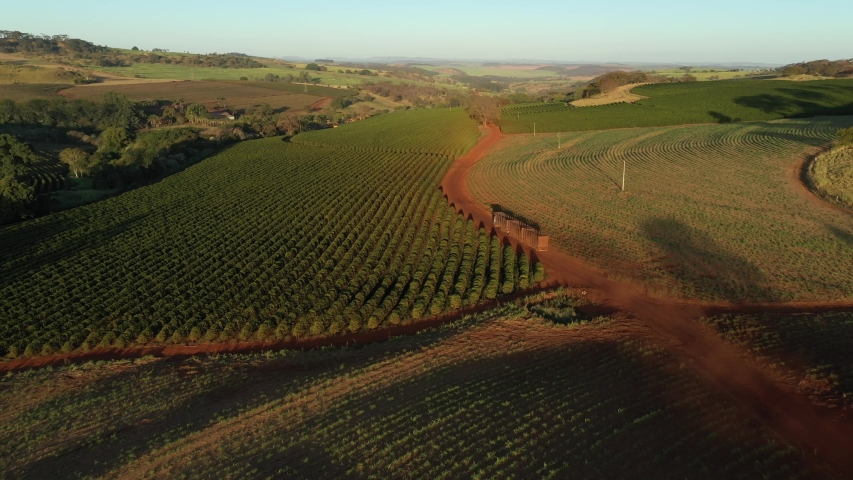 Truck travels on a dirt road next to a coffee plantation in Brazil - aerial view