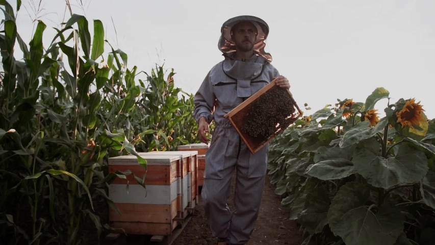 Young beekeepers work with bees in the apiary and eat honey Royalty-Free Stock Footage #1057111127