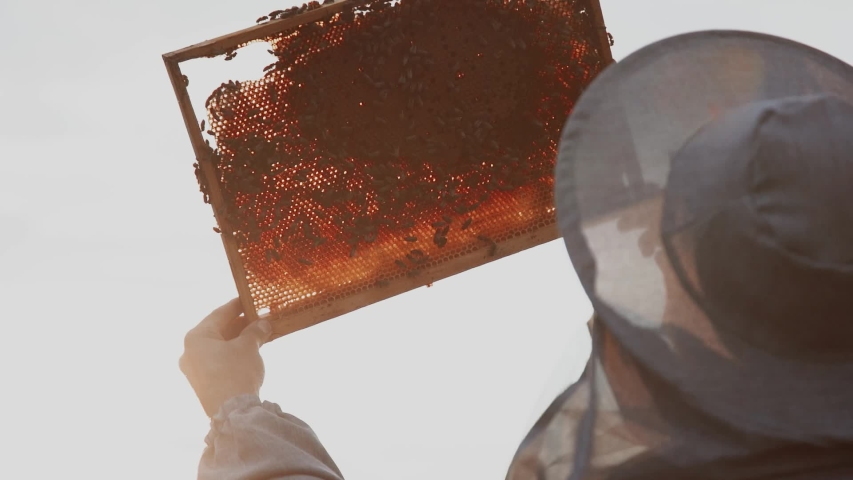 Young beekeepers work with bees in the apiary and eat honey Royalty-Free Stock Footage #1057111193