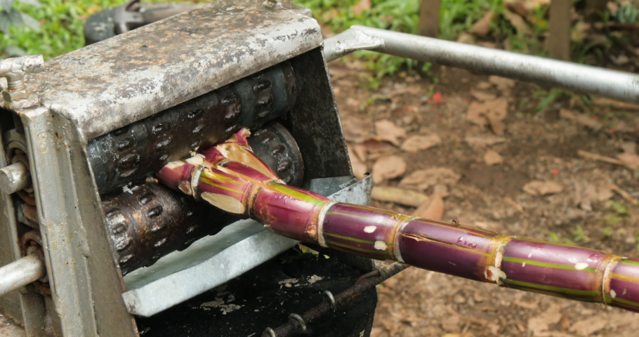 Medium shot of a mechanical sugar cane crusher being actively used and operated by two Costa Rican men. | Shutterstock HD Video #1057135094