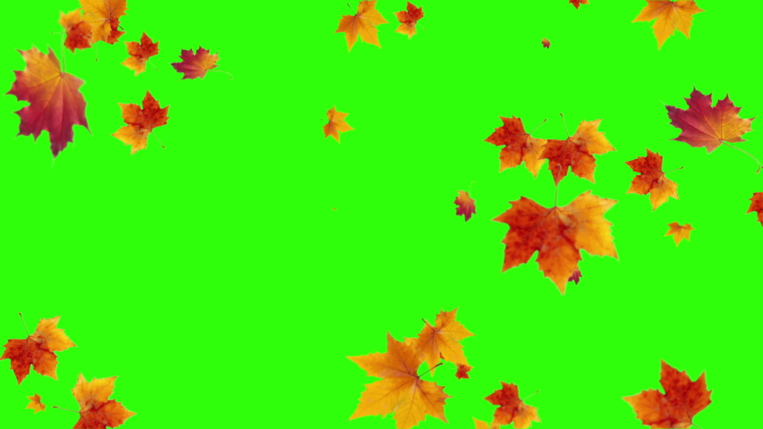 Leaf fall animation. Autumn maple leaves falling on green chromakey background.  | Shutterstock HD Video #1057148087