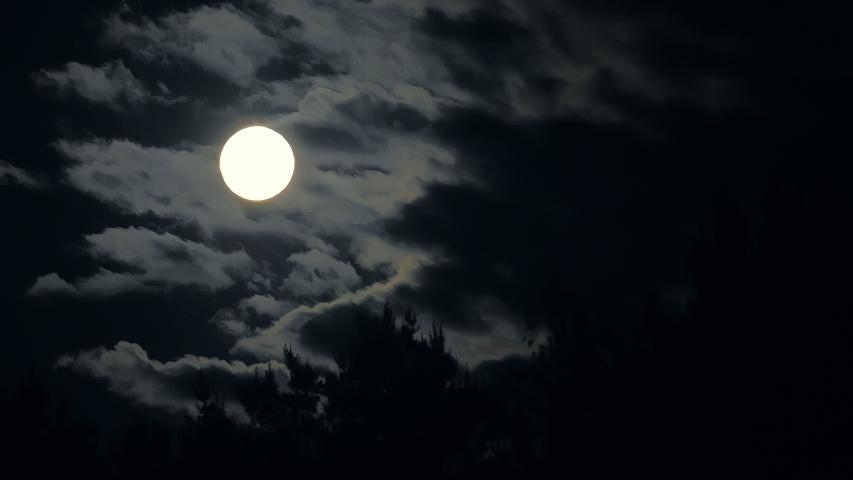 Moon night forest mystic branch dark blue tree danger wolf | Shutterstock HD Video #1057177852