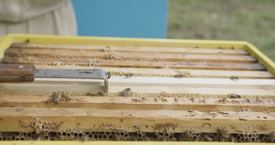 The beekeeper pulls out frames with honeycomb honey. A man checks frames with honey. Honey harvest. | Shutterstock HD Video #1057226644