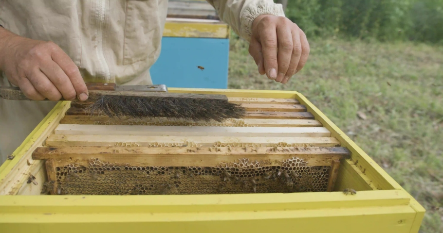 A man checks frames with honey. Honey harvest. Beekeeper gets frame honeycomb from the hive. | Shutterstock HD Video #1057226647