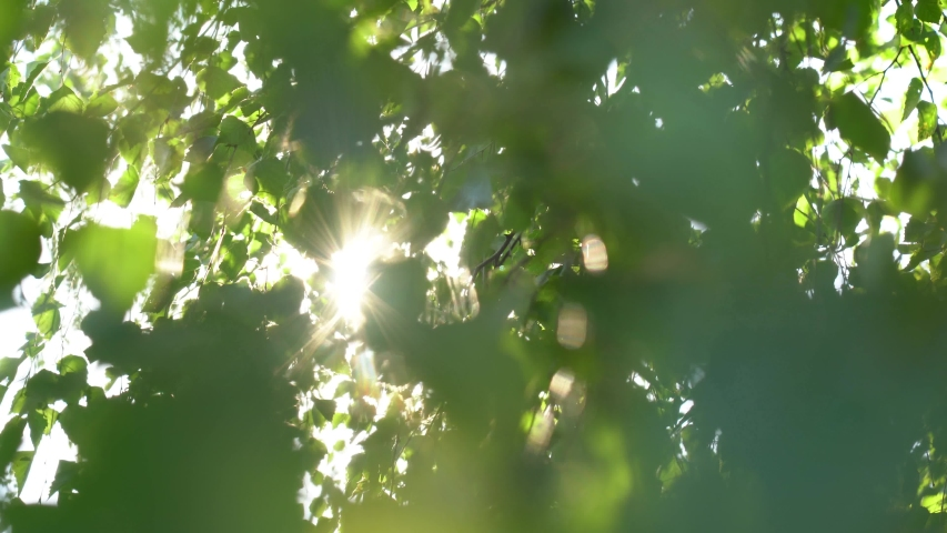 Beautiful green natural 4k abstract video bokeh background. Fresh foliage of leafy birch tree isolated on sky background. Sun rays bursting through leaves blowing in wind. Royalty-Free Stock Footage #1057226665