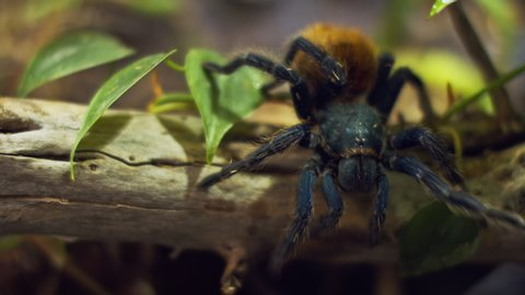 Arachnid Stock Video Footage 4k And Hd Video Clips Shutterstock