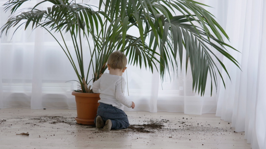 Amusing little child take out soil from flower pot , dirty home floor, boring corona virus time Royalty-Free Stock Footage #1057230289