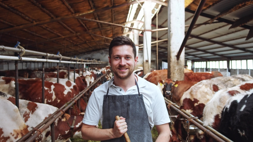 Young smiling brunette man in grey apron looking at camera on husbandry. Cowshed barn interior, stall, cowhouse. Successful agriculture worker cleaning and feeding cows. Ecologically friendly farming.