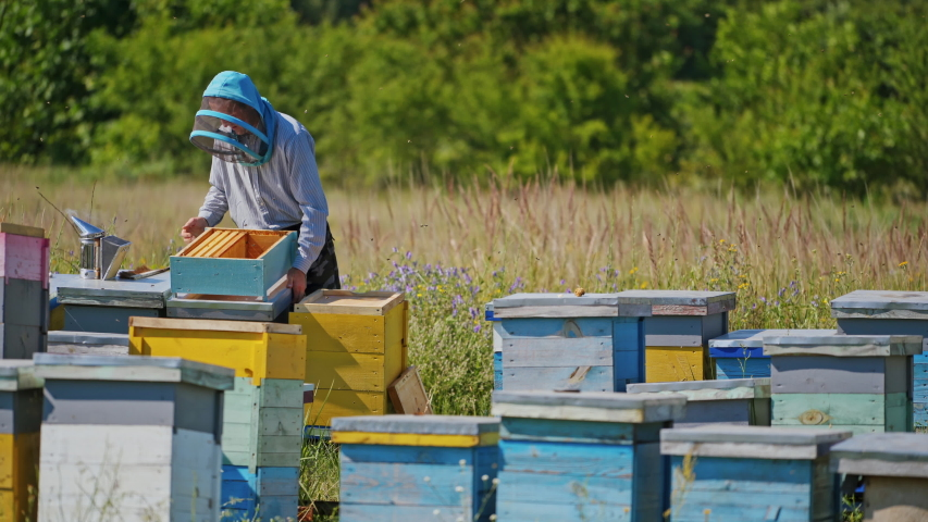 Wooden bee houses in the garden. Professional beekeeper in protective hat is busy on apiary. Bee master works near bee hives in summer. Royalty-Free Stock Footage #1057246432