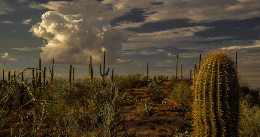 Cactus and desert flora with summer monsoon clouds from Signal Hill at Saguaro National Park