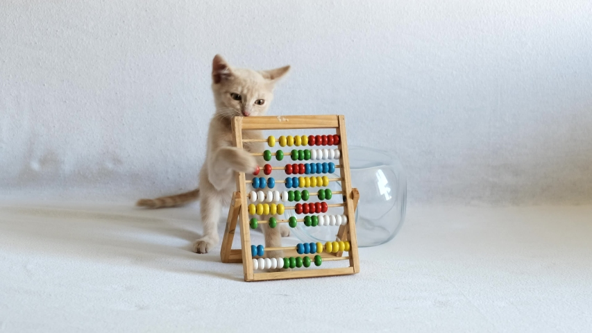 A small cream-colored kitten is playing with wooden abacus, on a white bedspread. back to school.
