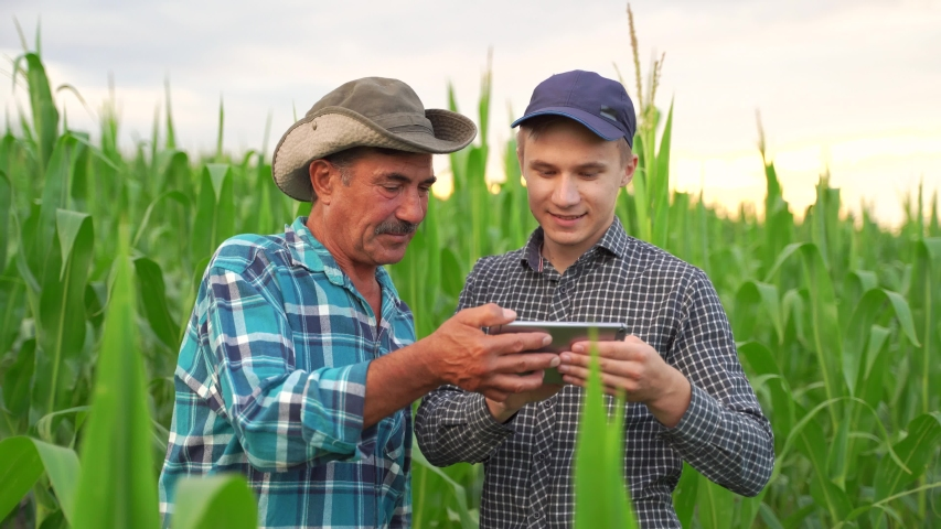 Farmers and Technology, Two farmers stand in corn field, discuss harvest, crops. young agronomist with touch tablet pc teaches senior coworker. Precision farming with online data management soft Royalty-Free Stock Footage #1057311691