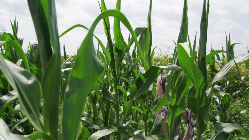 Girl runs among the young green corn in the field   Shutterstock HD Video #1057403686