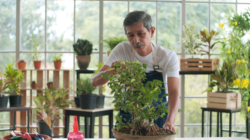 Happy senior elderly Asian man cutting and sprayed plants Bonsai tree in pots. Old man caring for house plant taking care of plants at home, spraying a plant with pure water from a spray bottle. | Shutterstock HD Video #1057404607