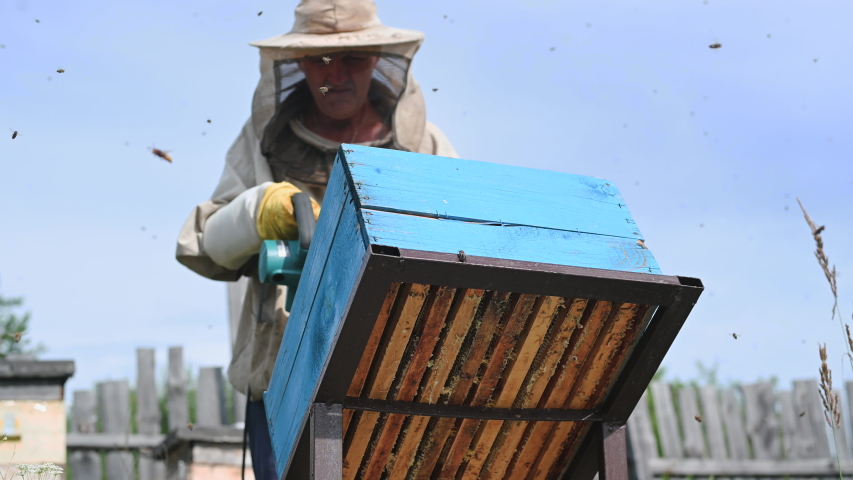 Beekeeper uses air-blowing device to brush bees aside. Bees swarm in collection container. Beekeeper handles receptacle with queen bee | Shutterstock HD Video #1057406272