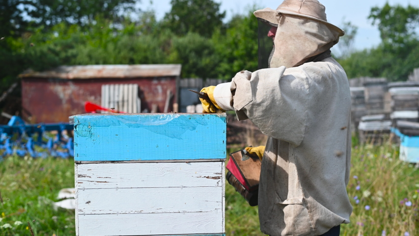 Eco apiculture and honey production business. Beekeeper fumigating bees with smoke to remove honeycombs from the apiary houses. Beepeeking process. | Shutterstock HD Video #1057406302