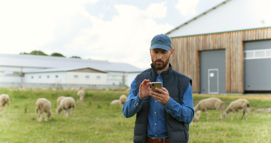 Handsome male Caucasian hands holding and texing message on smartpphone outdoors. Sheep at grazing pasture on background. Man shepherd tapping and scrolling on mobile phone. Cattle farm.