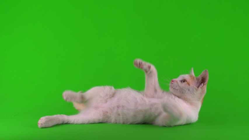 White-red cat kitten plays on a green background screen. | Shutterstock HD Video #1057411735