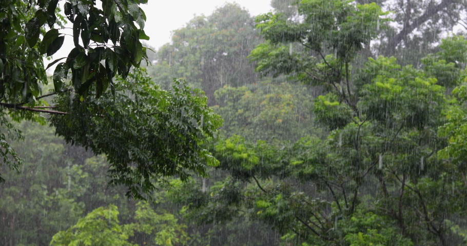 Rain on the background,Heavy rain in the forest, Rain drops falling,Season background