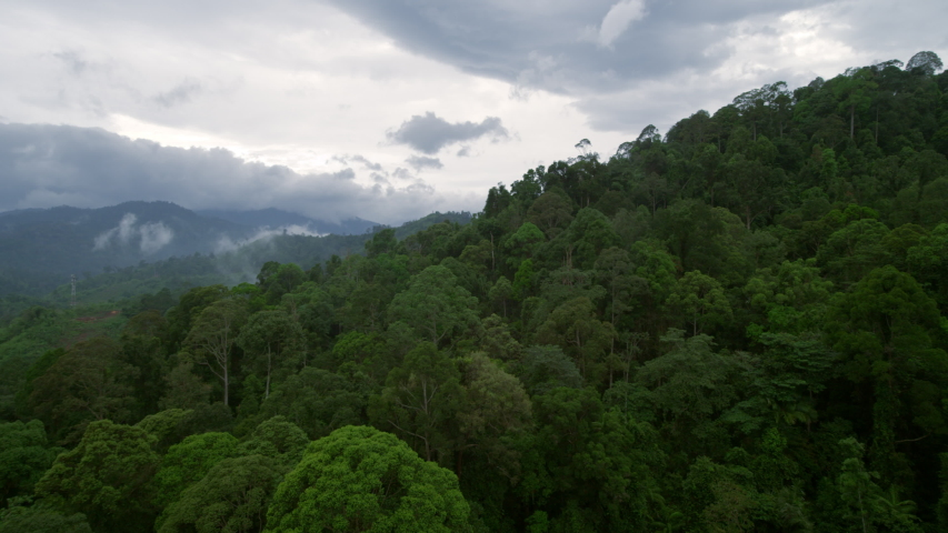 Aerial drone flight over giant tropical rainforest treetops. Sideway flyover trees on a misty rainy season jungle mountain in Thailand in foggy mystical nature atmosphere | Shutterstock HD Video #1057496587