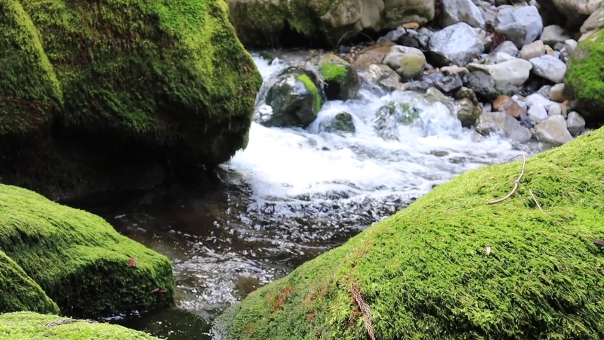 River murmuring with pure underground water