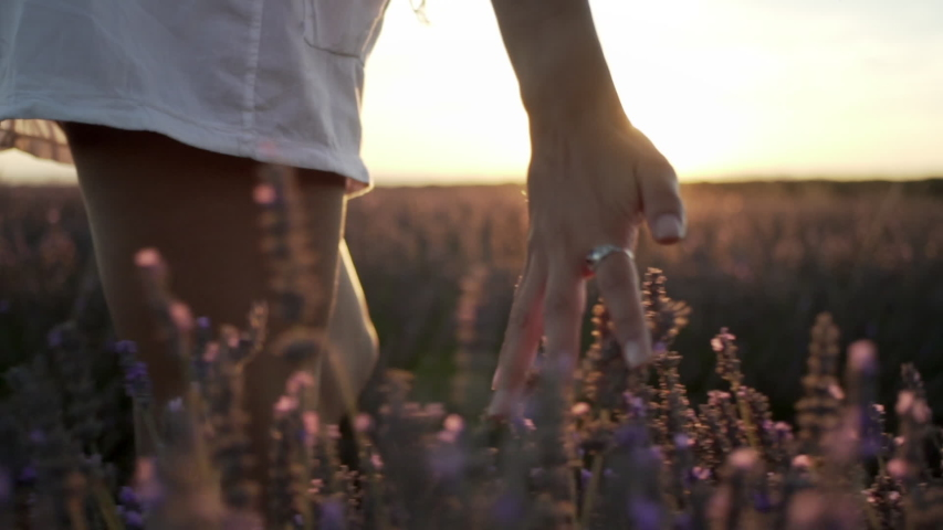 Woman walking while touching lavender flowers in the field | Shutterstock HD Video #1057511599