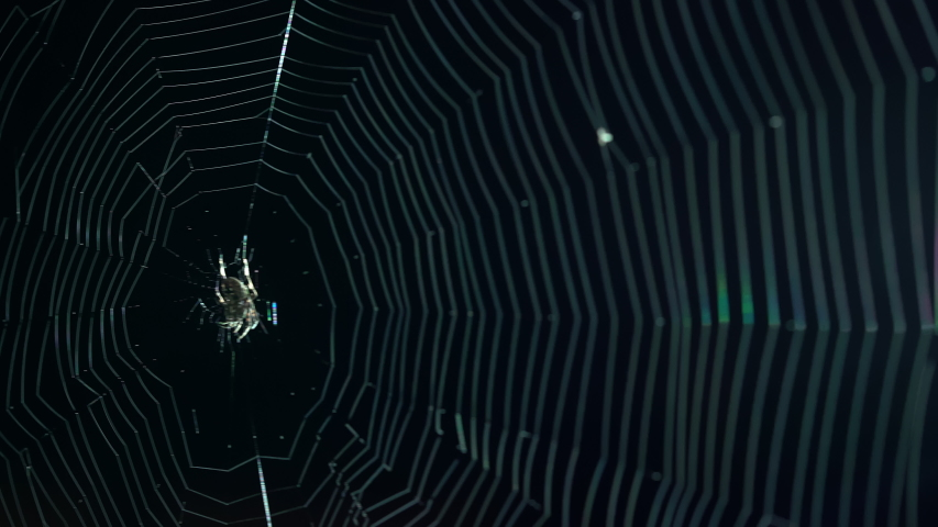 Scary Halloween St. Andrews cross spider in large spider web at night waiting for prey. Royalty-Free Stock Footage #1057525609