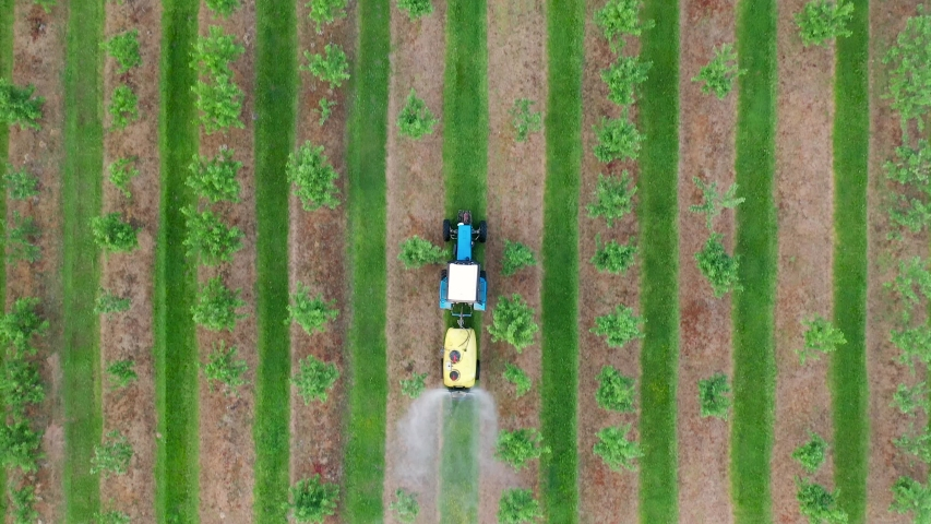 Farming tractor spraying on apple fruit garden with sprayer, herbicides and pesticides. Spraying chemical insecticide or fertilizers to blooming orchard trees, agricultural works. Aerial view top