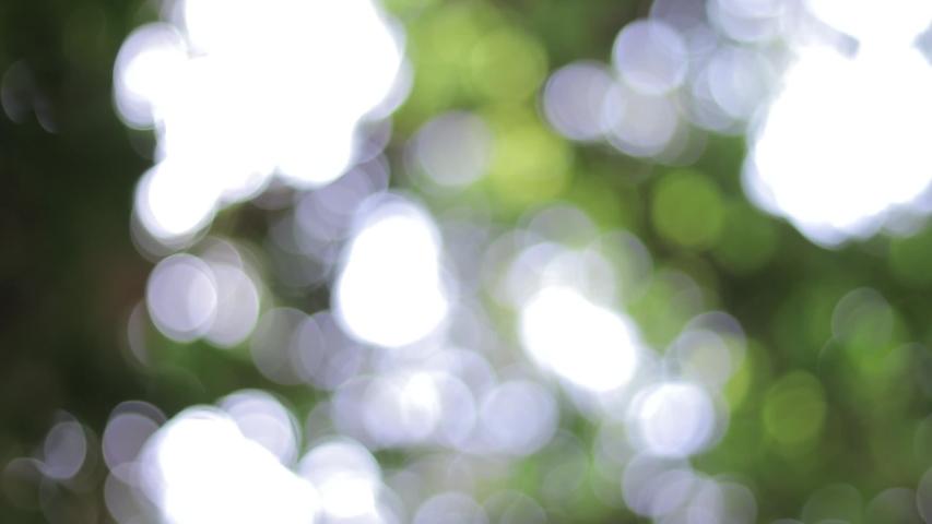 Bokeh  of green leaves. Defocus to focus of leaves in slow motion.    Shutterstock HD Video #1057532119